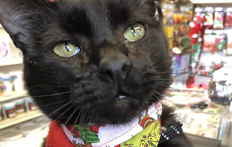 Close up of black cat in a pet store.